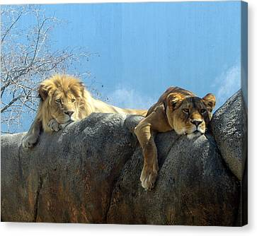 We Are Tired Canvas Print