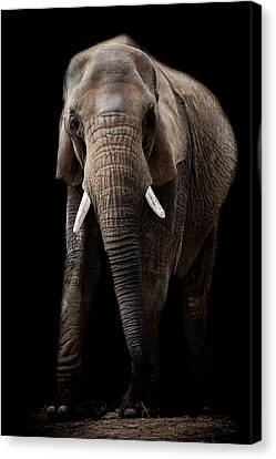 We Shall Never Forget Canvas Print by Paul Neville