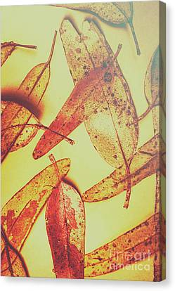 Weathered Autumn Leaves Canvas Print