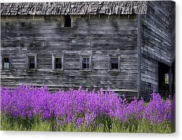 Weathered Barn - Flowers Canvas Print by Nikolyn McDonald