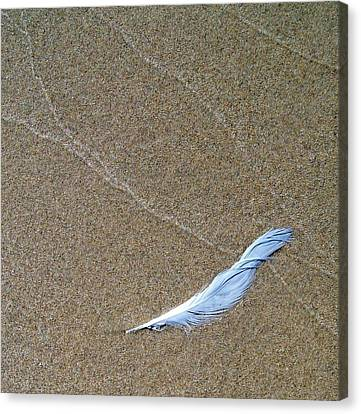 Weathered Feather  Canvas Print by Michelle Calkins