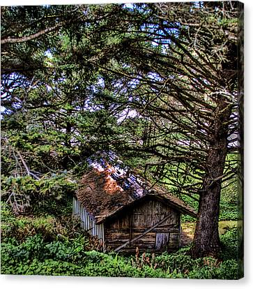 Weathered Shed Canvas Print by David Patterson