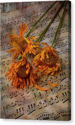 Weathered Sunflowers Canvas Print by Garry Gay