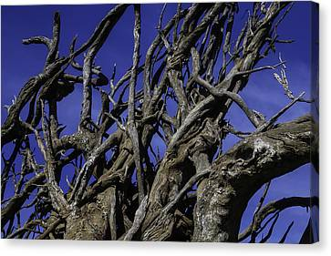 Weathered Tree Roots Canvas Print