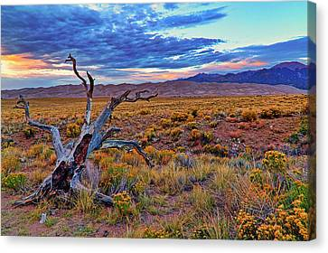 Weathered Wood And Dunes - Great Sand Dunes - Colorado Canvas Print by Jason Politte