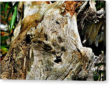 Weathered Wood Canvas Print by Debbie Portwood