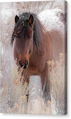 Bighorn Canyon National Recreation Area Canvas Print - Weathering The Cold by Sandy Sisti