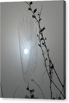 Canvas Print featuring the photograph Web Glow by Peg Urban