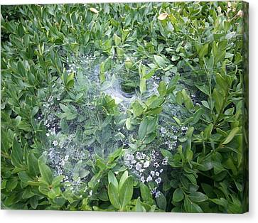 Web In Boxwood Canvas Print