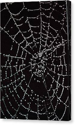Web Of Pearls Canvas Print by Rebecca Fitzgerald