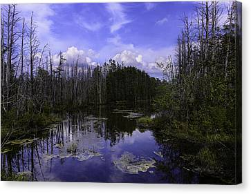 Webb Cedar Swamp Blog Canvas Print