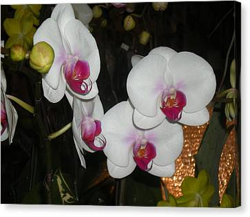 Canvas Print featuring the photograph Wedding Orchids by Kim Prowse