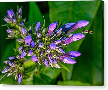 Wee Bee Canvas Print by Steve Harrington