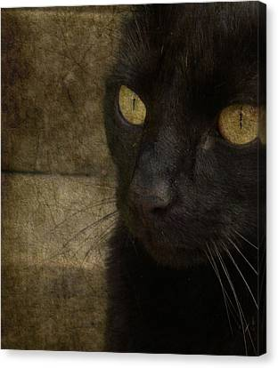 Wee Sybil  Canvas Print by Paul Lovering