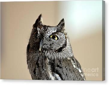 Wee Western Screech Owl Canvas Print