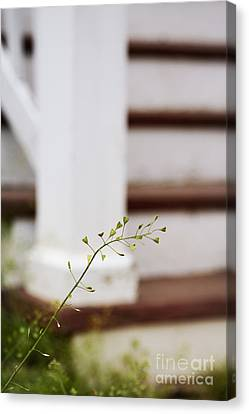 Side Porch Canvas Print - Weed by Margie Hurwich