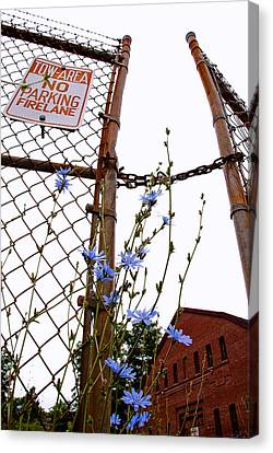 Street Shot Canvas Print - Weeds by Andrew Kubica