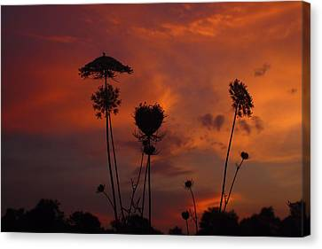 Weeds In The Sunrise Canvas Print