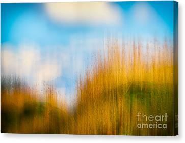 Weeds Under A Soft Blue Sky Canvas Print