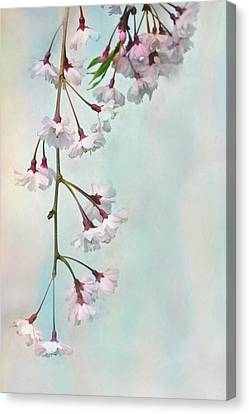 Weeping Cherry Canvas Print by Lori Deiter