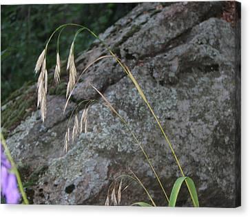 Weeping Grass Canvas Print