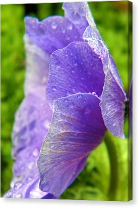 Weeping Petals Canvas Print