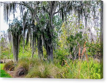 Canvas Print featuring the photograph Weeping Willow by Madeline Ellis