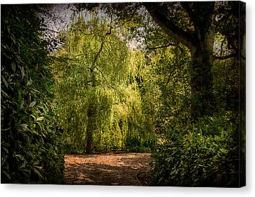 Canvas Print featuring the photograph Weeping Willow by Ryan Photography