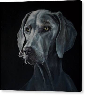 Weimaraner Canvas Print by Matt Johnson