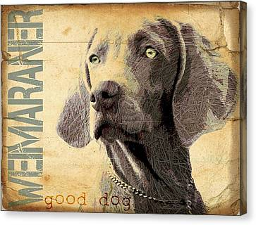 Weimaraner Canvas Print by Wendy Presseisen