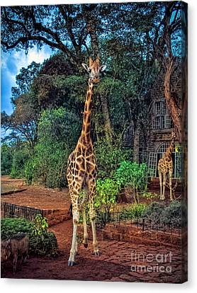 Welcome To Giraffe Manor Canvas Print by Karen Lewis