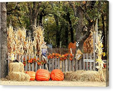 Canvas Print featuring the photograph Welcome To The Pumpkin Patch by Sheila Brown