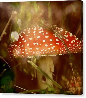 Welcome To Wonderland Canvas Print by Odd Jeppesen