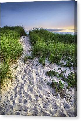Wellfleet Beach Path Canvas Print by Tammy Wetzel