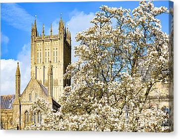 Canvas Print featuring the photograph Wells Cathedral And Spring Blossom by Colin Rayner