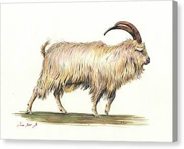 Mountain Goat Canvas Print - Welsh Long Hair Mountain Goat by Juan Bosco