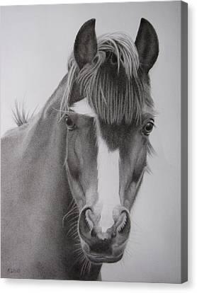 Welsh Pony Canvas Print by Karen Wood
