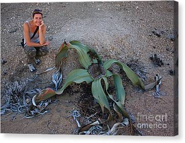 Welwitschia Plant And Woman Canvas Print by Francesco Tomasinelli