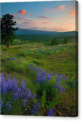 Lupine Canvas Print - Wenas Valley Sunset by Mike  Dawson