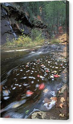 West Fork Oak Creek And Fall Color Canvas Print
