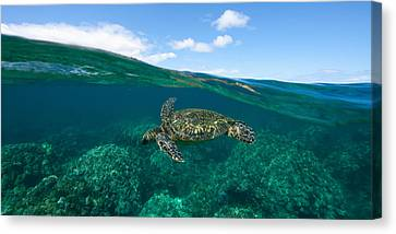 West Maui Green Sea Turtle Canvas Print