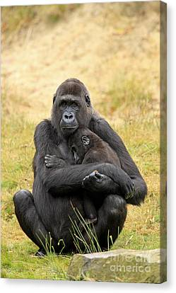 Western Gorilla And Young Canvas Print by Jurgen & Christine Sohns/FLPA
