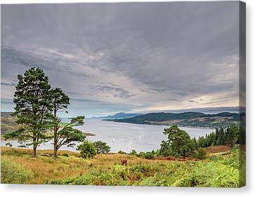Western Kyle Of Bute Canvas Print by David Head