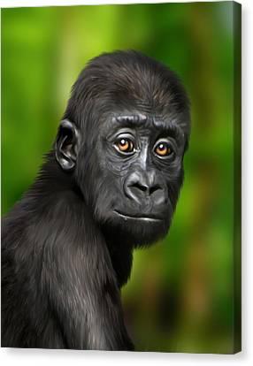 Western Lowland Gorilla Baby Canvas Print