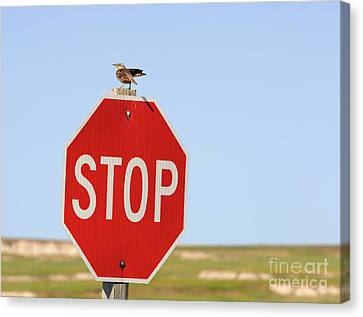 Western Meadowlark Singing On Top Of A Stop Sign Canvas Print by Louise Heusinkveld