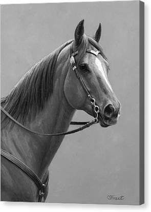 Western Quarter Horse Black And White Canvas Print by Crista Forest