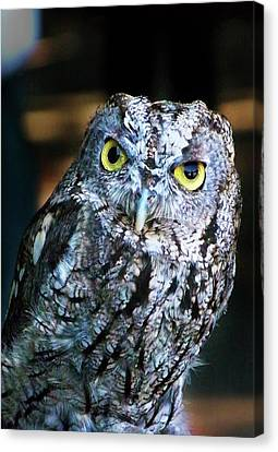 Canvas Print featuring the photograph Western Screech Owl by Anthony Jones