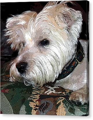 Westie Canvas Print by Mindy Newman