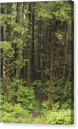 Wet Forest Canvas Print by Carolyn Brown