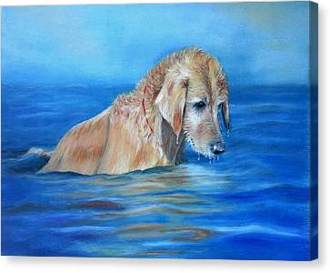 Canvas Print featuring the painting Wet Godden Retriever by Ceci Watson
